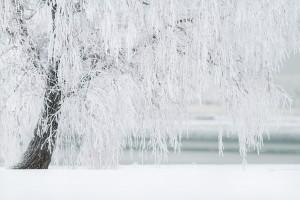 winter-1367153_1280